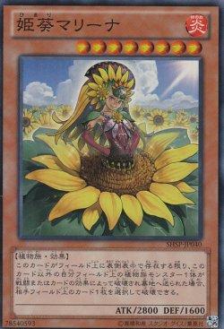 画像1: 姫葵マリーナ