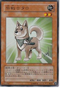 画像1: 柴戦士タロ